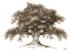 arte-pietra-albero-hover